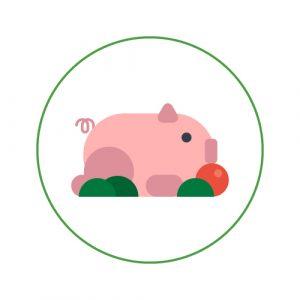 Viandes de porc